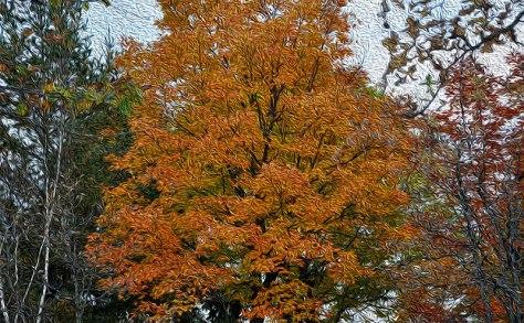 orangefall_800